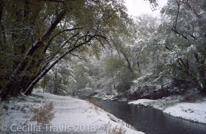 Fresh snow at Bear Creek Greenbelt, Lakewood