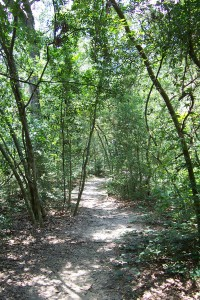 Path at Edith L. Moore Sanctuary