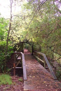 Bridge at Edith L. Moore Sanctuary