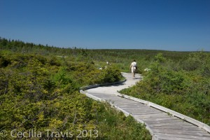 Boardwalk at Cape Breton