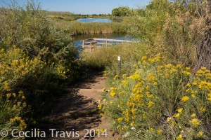 Audubon's Discovery trail at Chatfield State Park