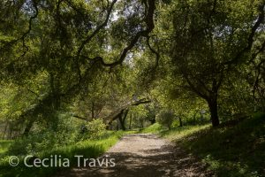 Alum Rock Park, San Jose, California