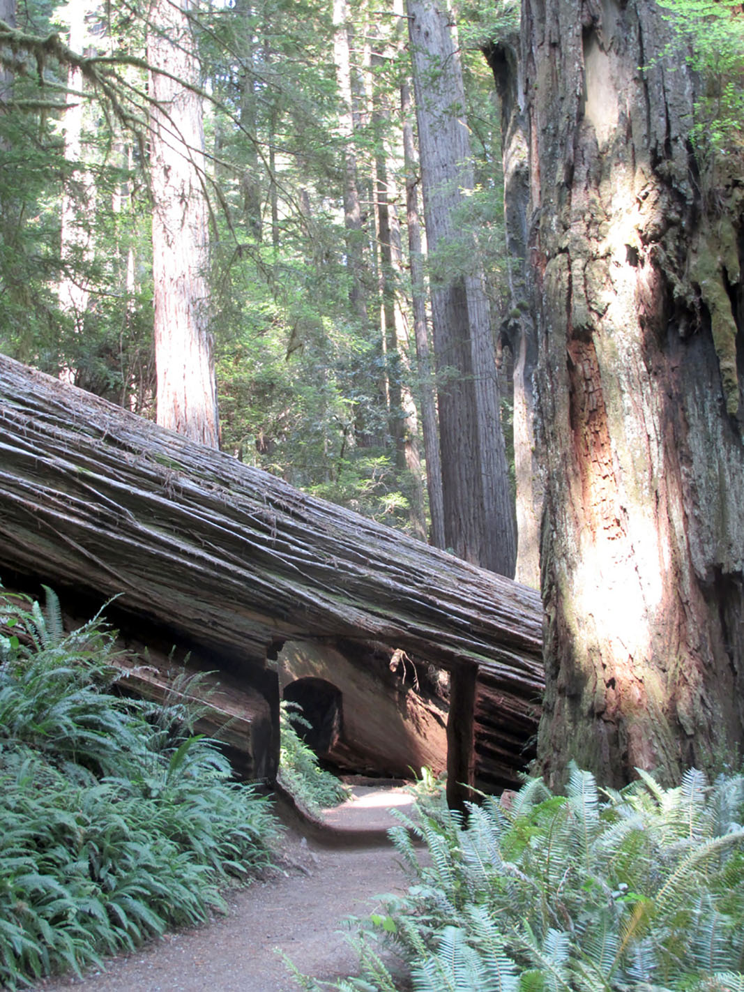 California Accessible Easy Nature Trails | Accessible Nature